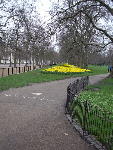 ANOTHER VIEW OF THE DAFFODILS
