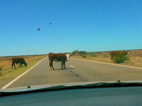 Hamburger! Get off the road!