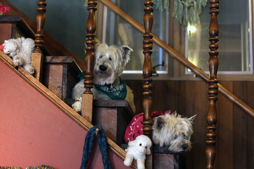 Guard Dogs at the Stitchin' Den
