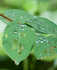 Wet leaf on a sunny day