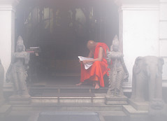 Gangaramaya Temple - Monk in the Morning Mist