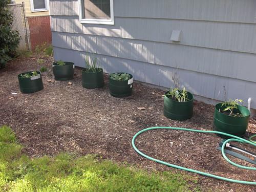 L-R: herbs, peas and cucumbers, garlic, broccoli, artichoke and onions, tomatoes