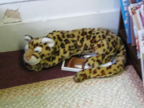 Jaguar hiding in the reading nook