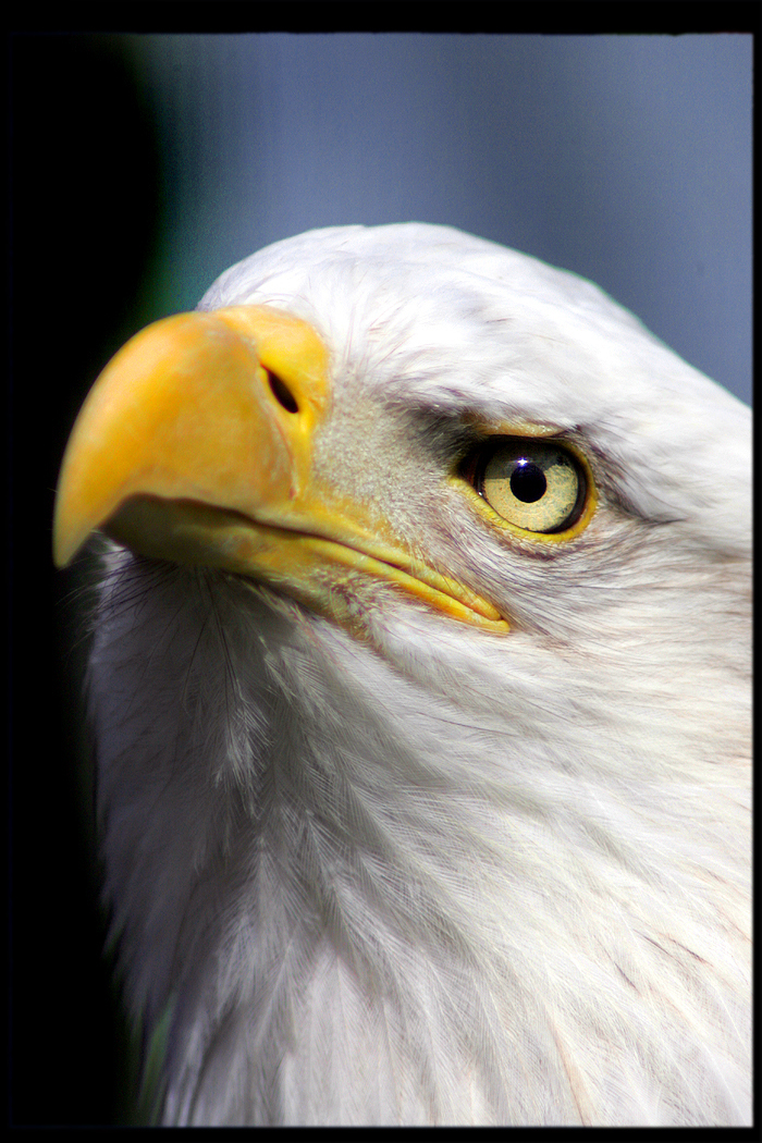 eagle 2009