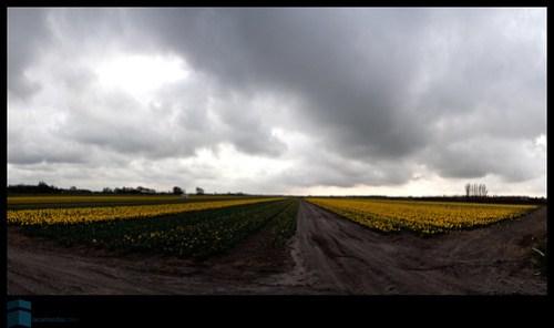 Noordwijk-20090328-0001