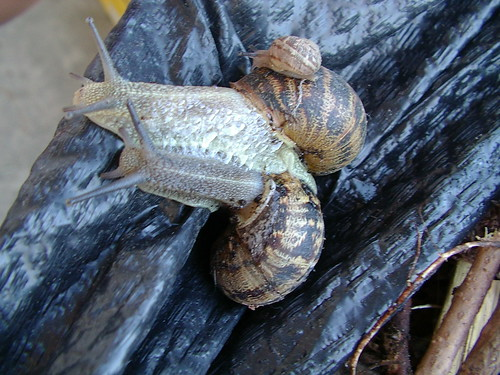 3 snails