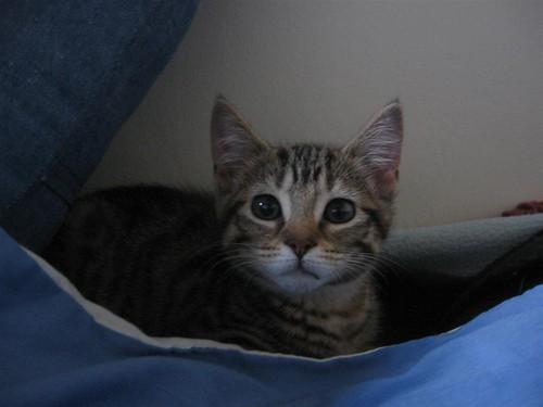 girl kitten 5