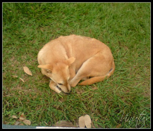 Street-Dog-LalBagh01