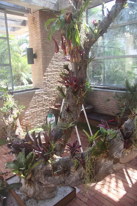 Jard n vertical tillandsias a reas - Tiestos para orquideas ...