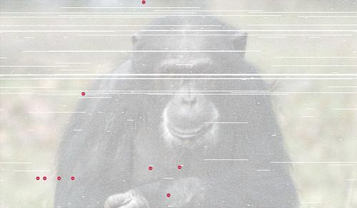 chimp-900
