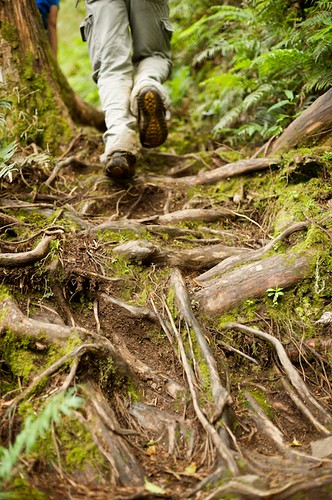 The hike up was sometimes a bit difficult due to these exposed roots and muddy conditions.