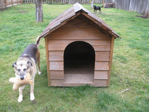 The coop, when it was a dog house