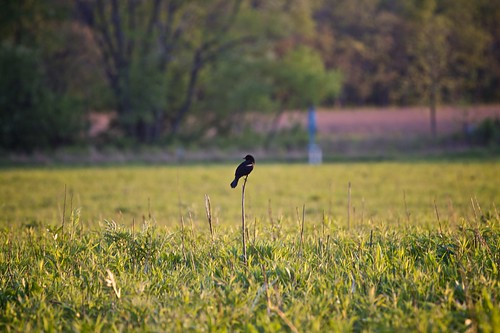 Bird on stick