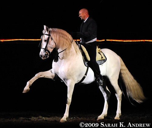 Matt McLaughlin and his Andalusian stallion, Pecos perform the Spanish Walk