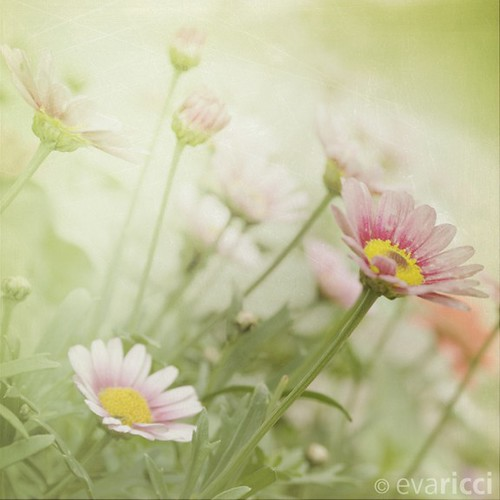 Eva Ricci Photography