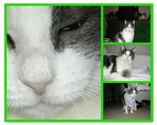 My Sweet Kitty Girl