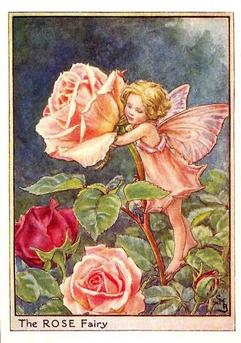 010-rose_flower_fairy