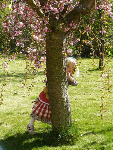 Under the cherry tree with an Ipod