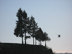 Trees & flight, Stanley Park