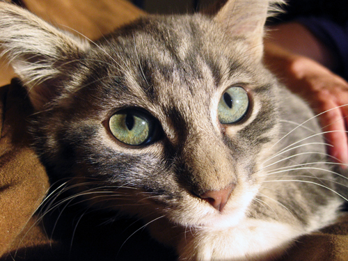 new foster cat (by jesh\)