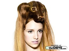 hairstyle looks like a dogs head