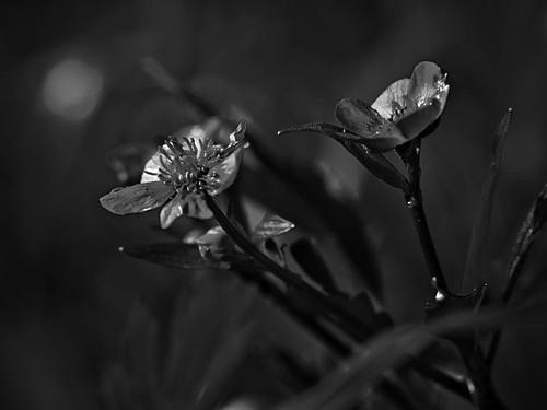 so dark by costelodc
