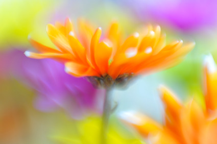 Abstract spring flowers by Order Mothers Day Flowers Virginia
