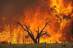 Australian Fires 2009
