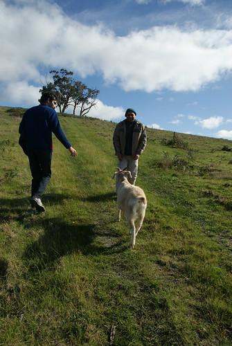 A contiki tour of the farm