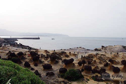 野柳地質公園內的蕈狀岩群。