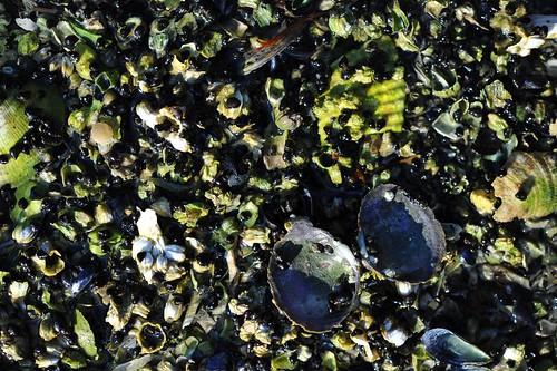 sea slurry2