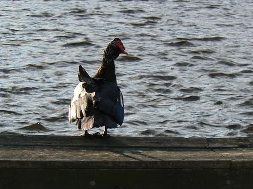 Elizabeth City - Duck