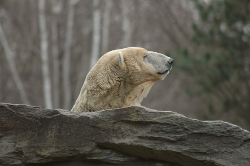 Aika im Tierpark Friedrichsfelde