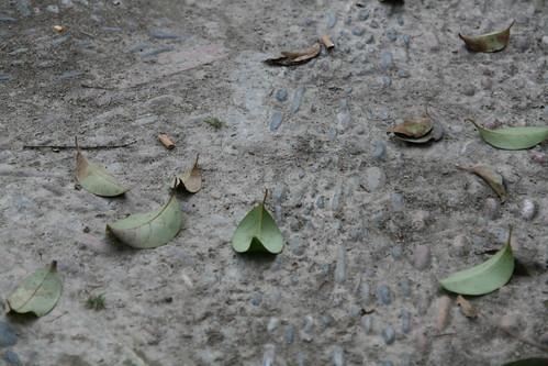 Jardines de Real Leaves