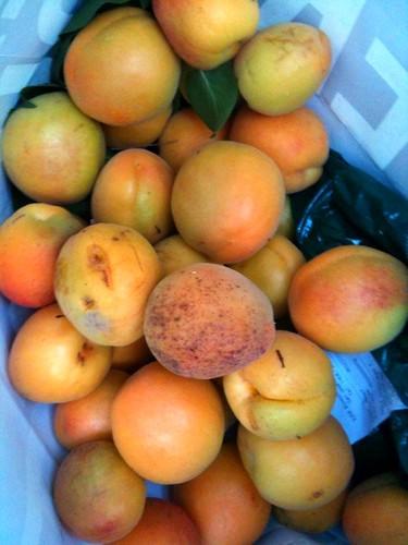 More apricots