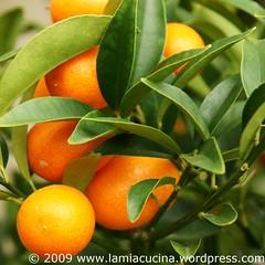 Kumquats ?