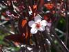 Garden of Aton 2009 - 50