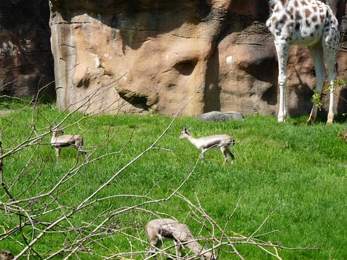 Mother's Day, Zoo Trip 022