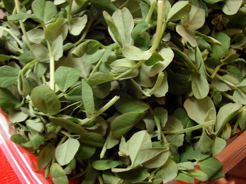 pea greens