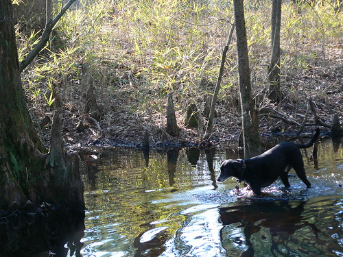 Merchant's Millpond State Park - Jimmie Wades in Water