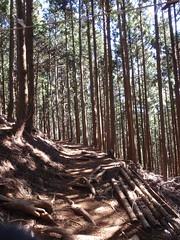 Test run for Ome-Mt. Takamizu trail run