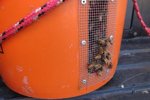 honey bee hive bucket
