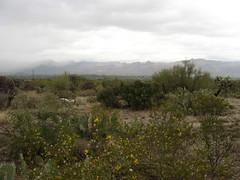 Looking North Towards the Santa Catalina Mount...