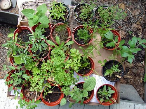 SCLT Plant Sale goodies