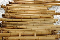 collection of bamboo