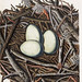 014-Nido de la Garza-Colección de nidos de aves 1772