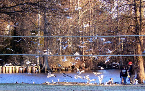 Elizabeth City - Couple Feeding Seagulls (Cropped)