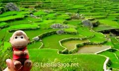 Sagadas Banga-an Rice Terraces