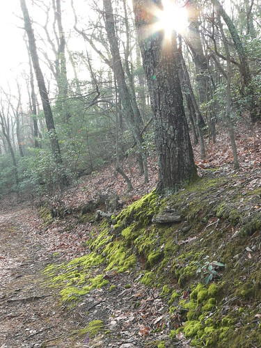 Fairystone State Park - Little Mountain Falls Trail - Moss and Sunlight