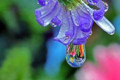 Chihuli blown glass water drop